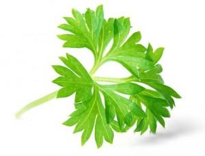 הכלורופיל מופיע בעלים ירוקים כמו: שמיר, פטרוזיליה, נענע, רוקט, חסה, עלי תרד, מנגולד, עשב חיטה
