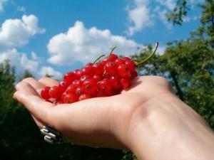"""תזונה נכונה ובחירה באוכל בעל ערך תזונתי הם המפתח לירידה במשקל עפ""""י הדיאטה של בוב גרין"""